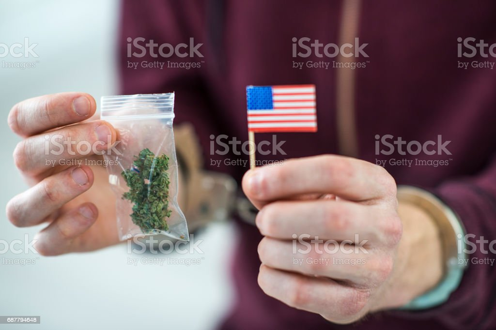 Arrested for marijuana, cannabis, drug possession. stock photo