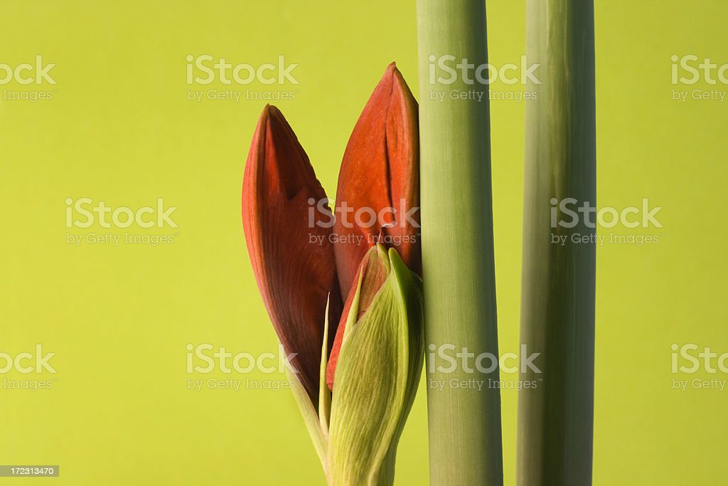 Arrival of Spring Hz royalty-free stock photo