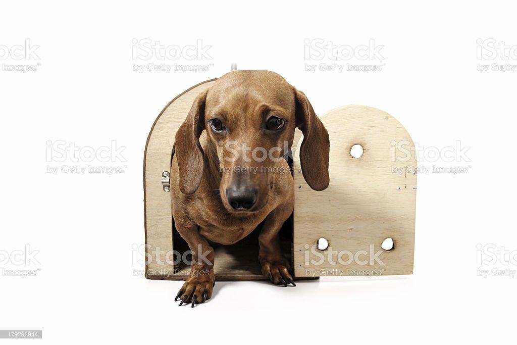 Arrived dog royalty-free stock photo