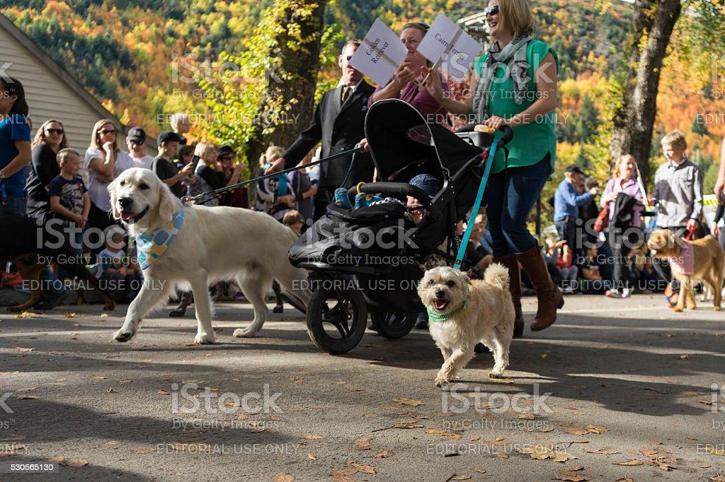 Arrowtown, New Zealand - April 23, 2016 Autumn festival stock photo