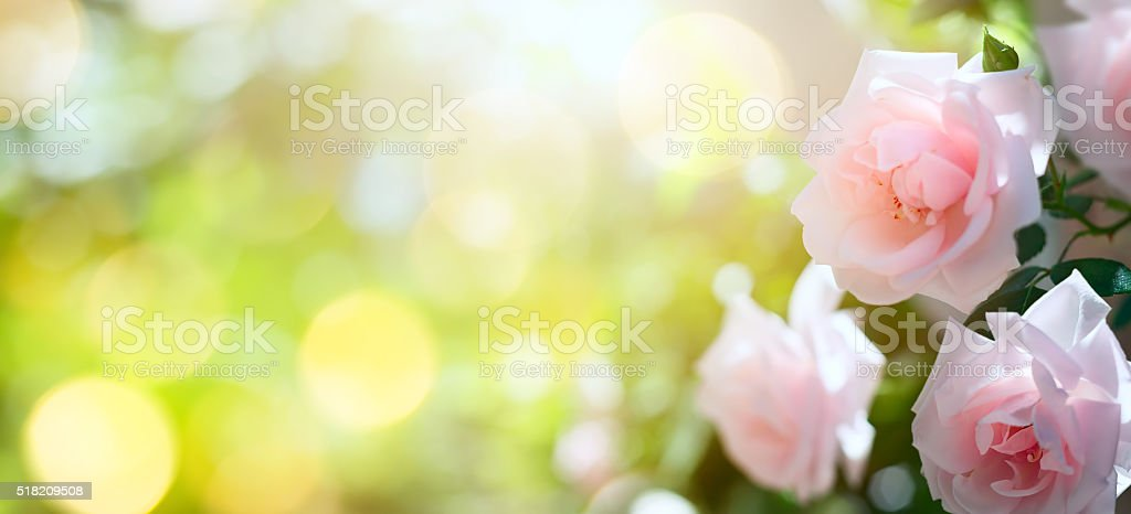 art Abstract spring or summer floral background stock photo