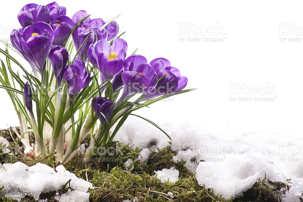 art Beautiful Spring Flowers stock photo