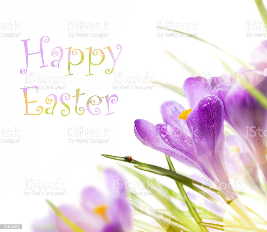 art easter background with spring flowers stock photo