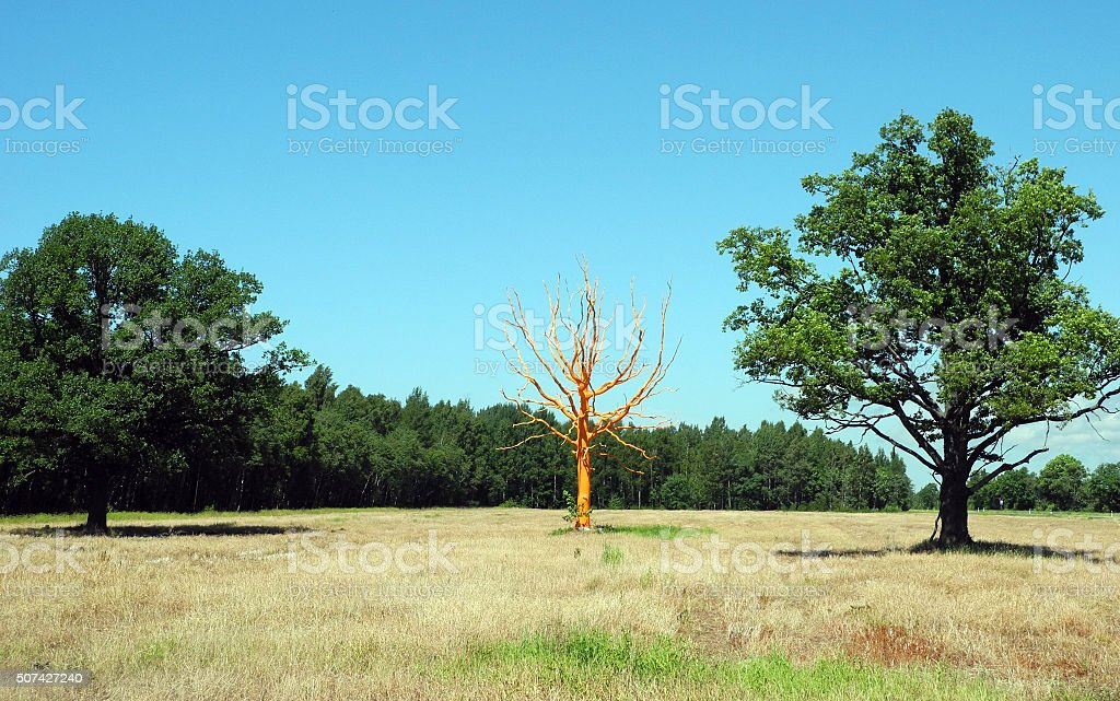 Art in nature, orange tree. stock photo