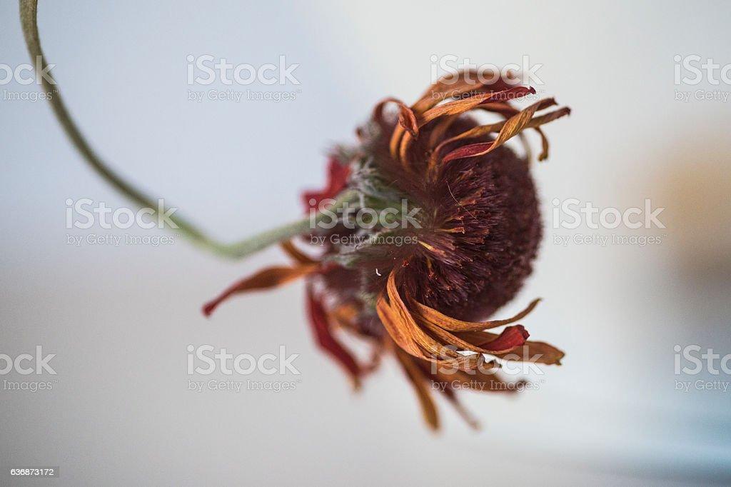 Dry flower inspyring