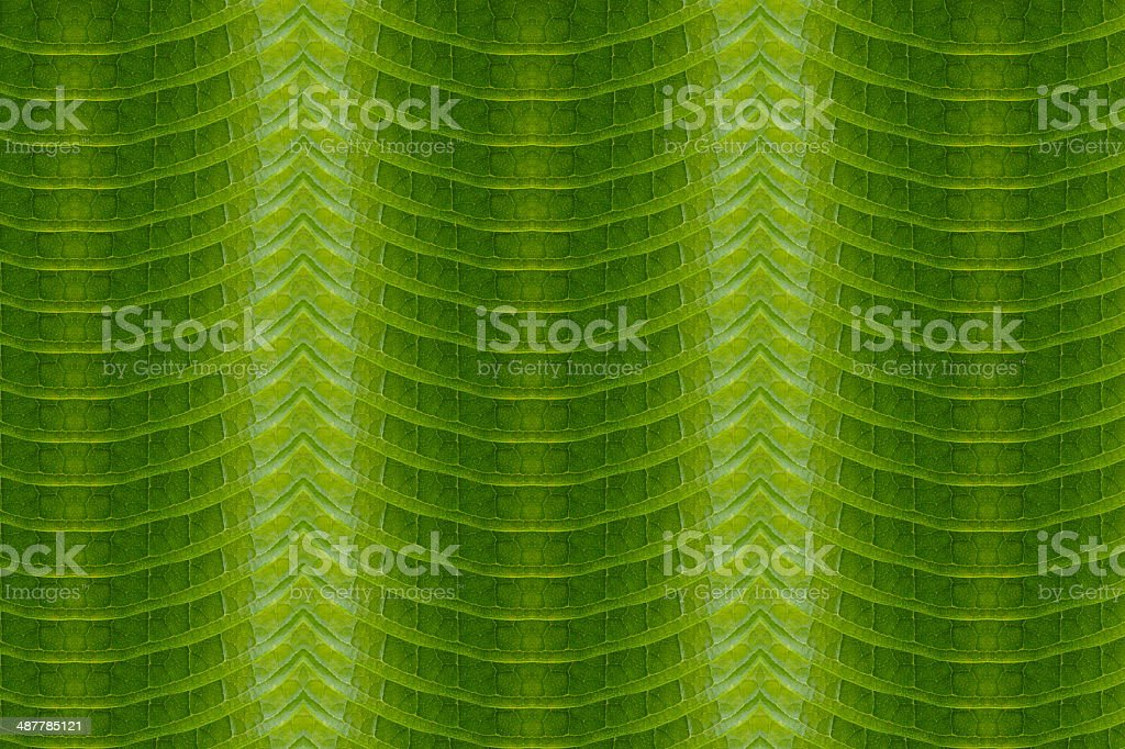 Art of the leaf pattern.(natural carpet) stock photo