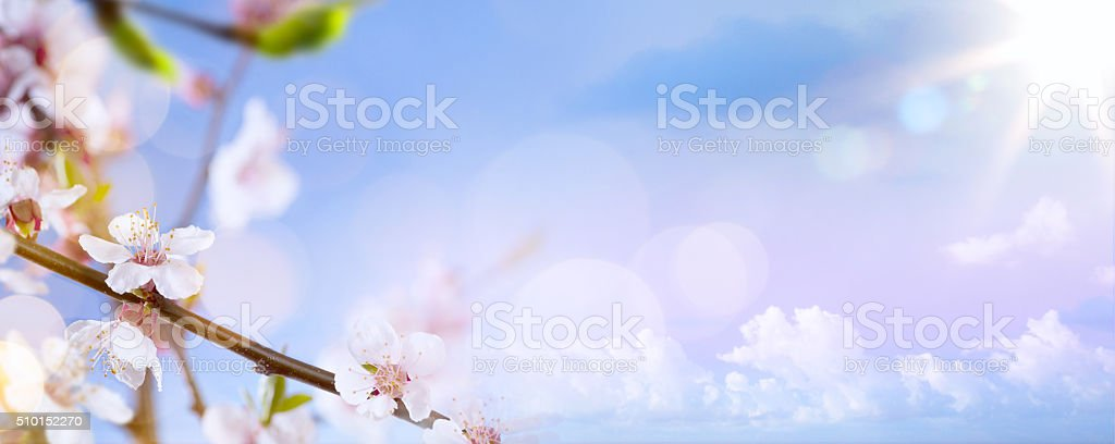 art Spring blossom background stock photo