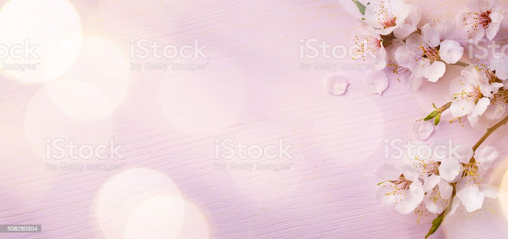 Art  Spring border background with pink blossom stock photo