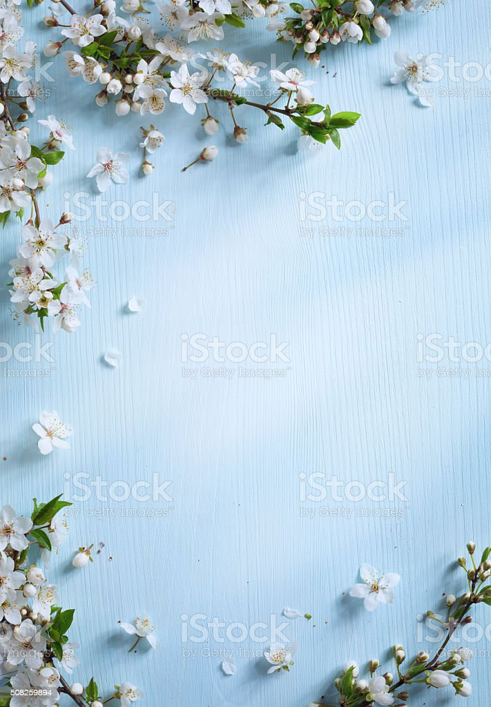 art Spring border background with white blossom stock photo