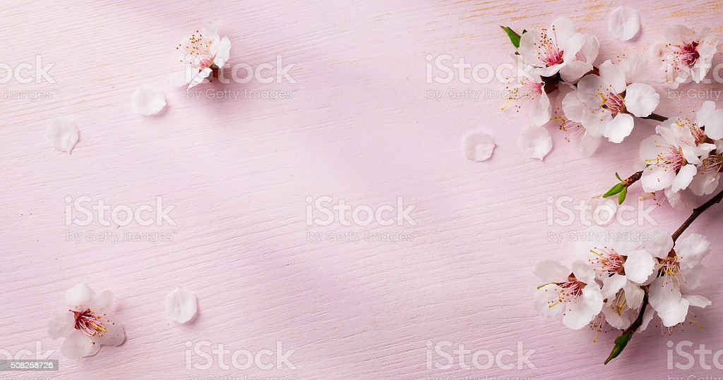 art  spring flowers frame  background stock photo