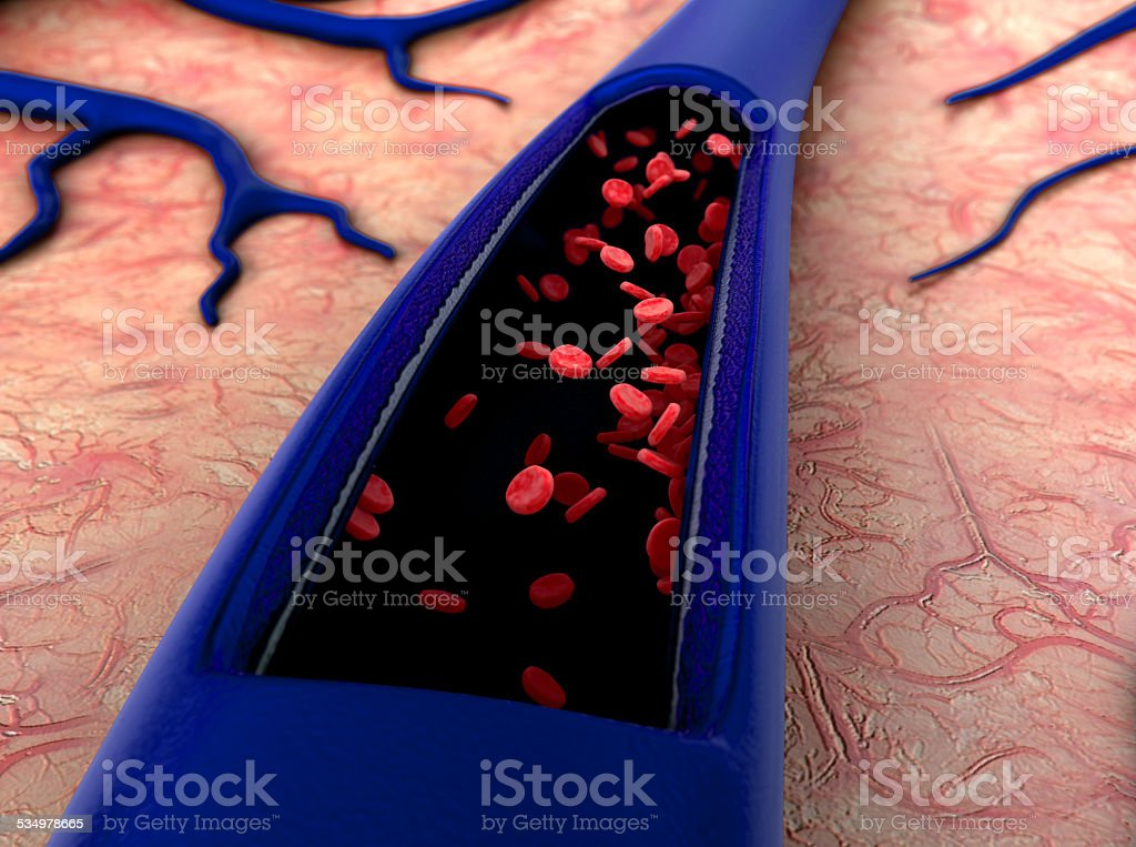 artery, erythrocyte stock photo