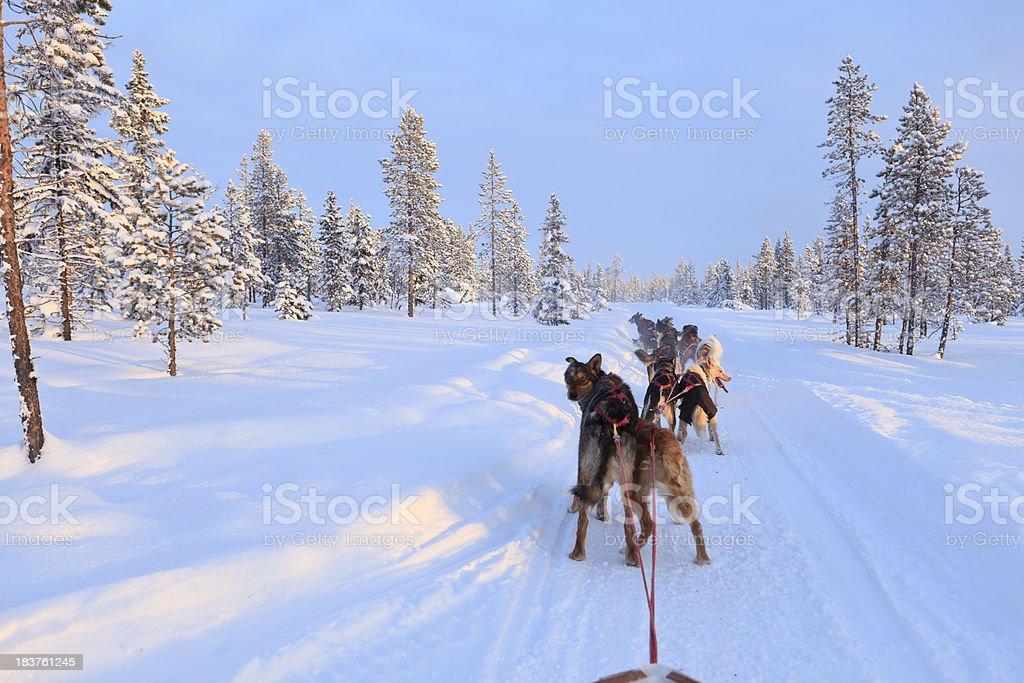 Artic - dog sled stock photo