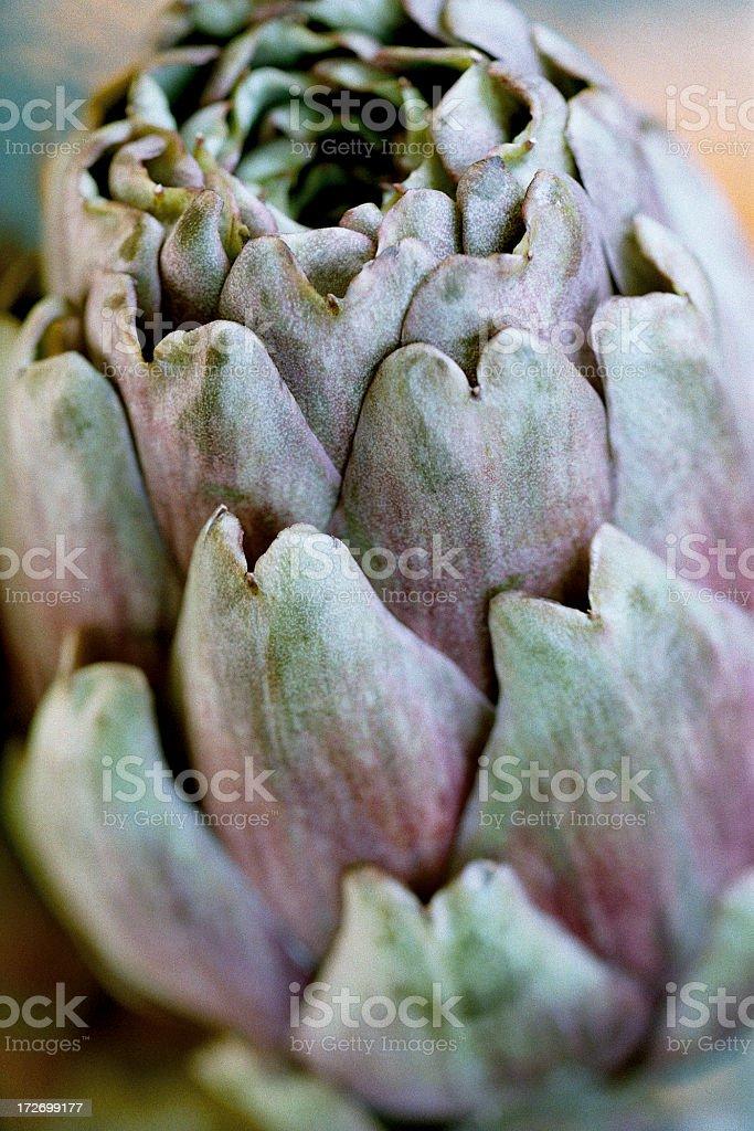 Artichoke Close-up royalty-free stock photo