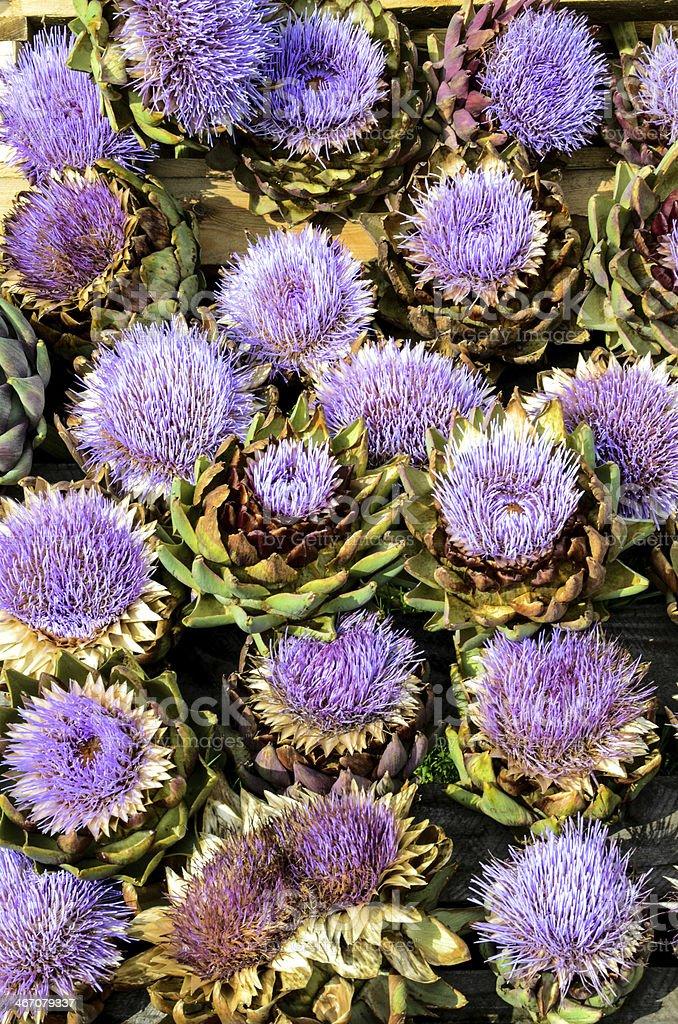 Artichoke Flowers - purple beauty royalty-free stock photo