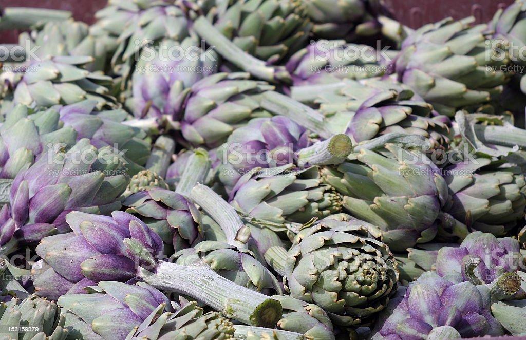 Artichoke Harvest royalty-free stock photo