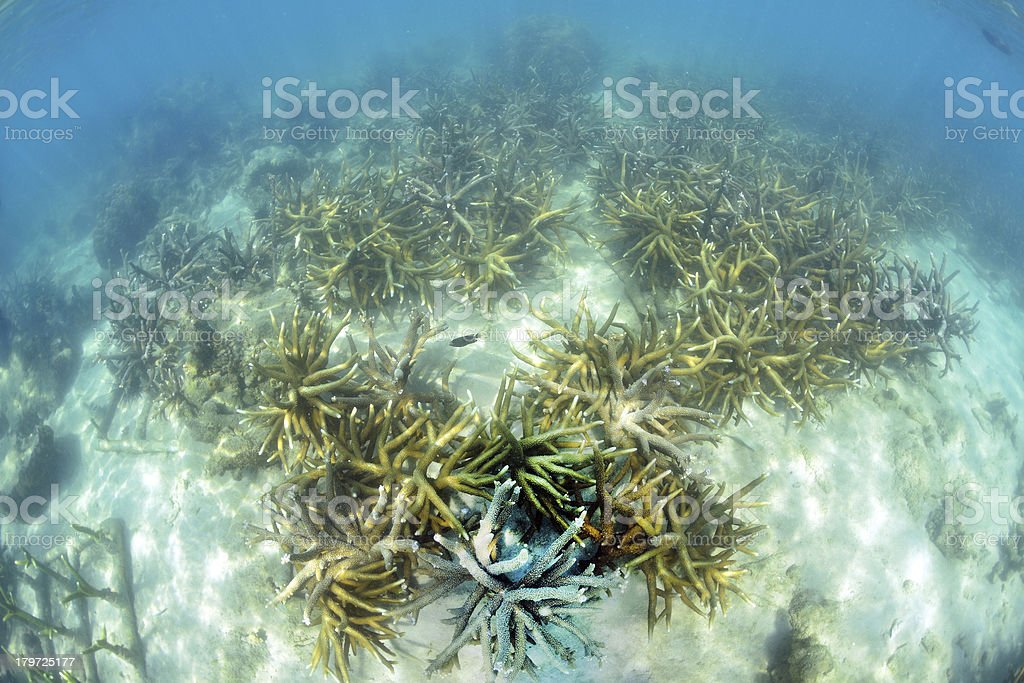 Artificial coral reef in the ocean royalty-free stock photo