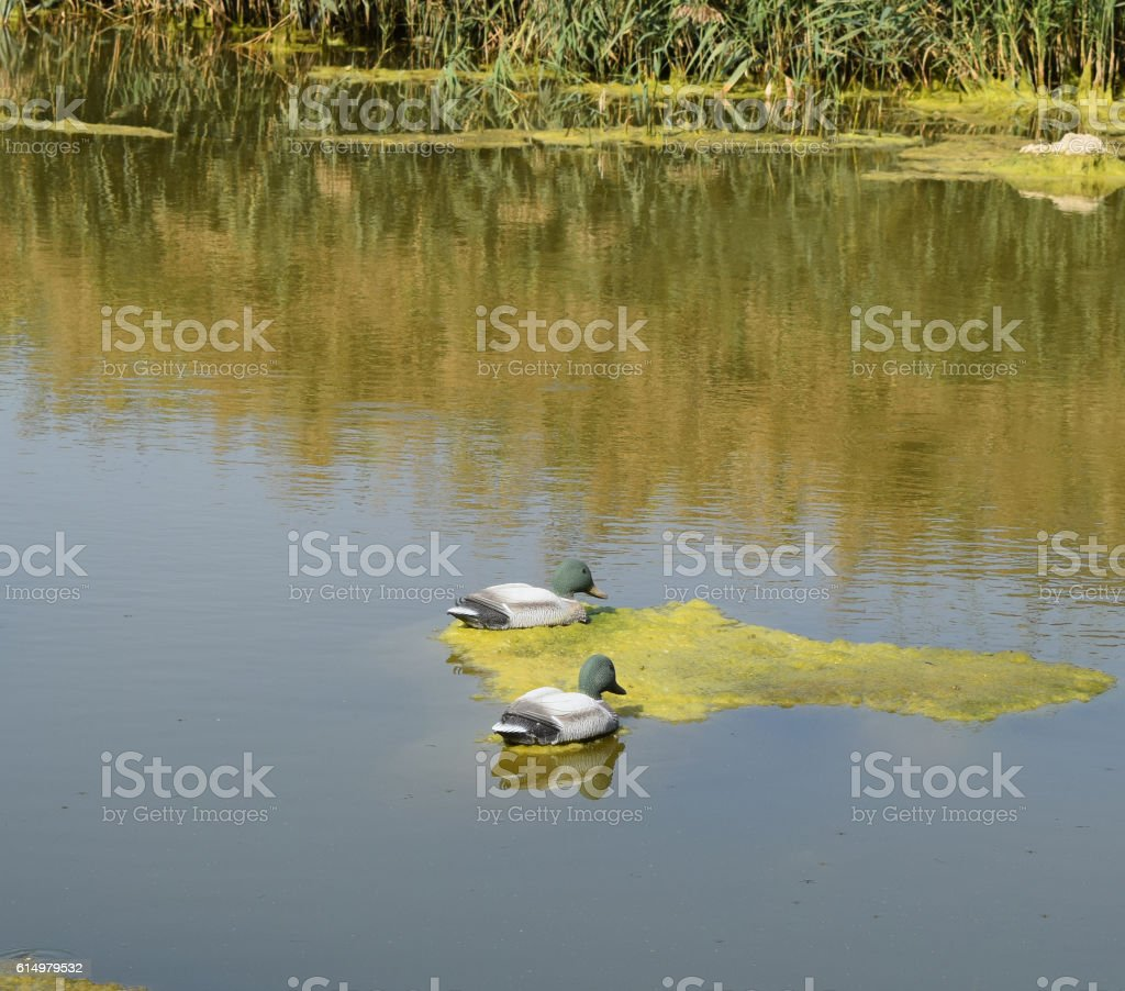 Artificial duck on a pond stock photo