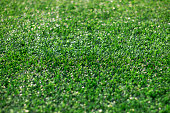 Artificial grass and the sun light as a background