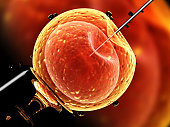 Artificial insemination. Needle puncture the cell membrane