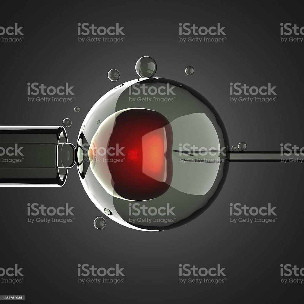 artificial insemination on gray background stock photo
