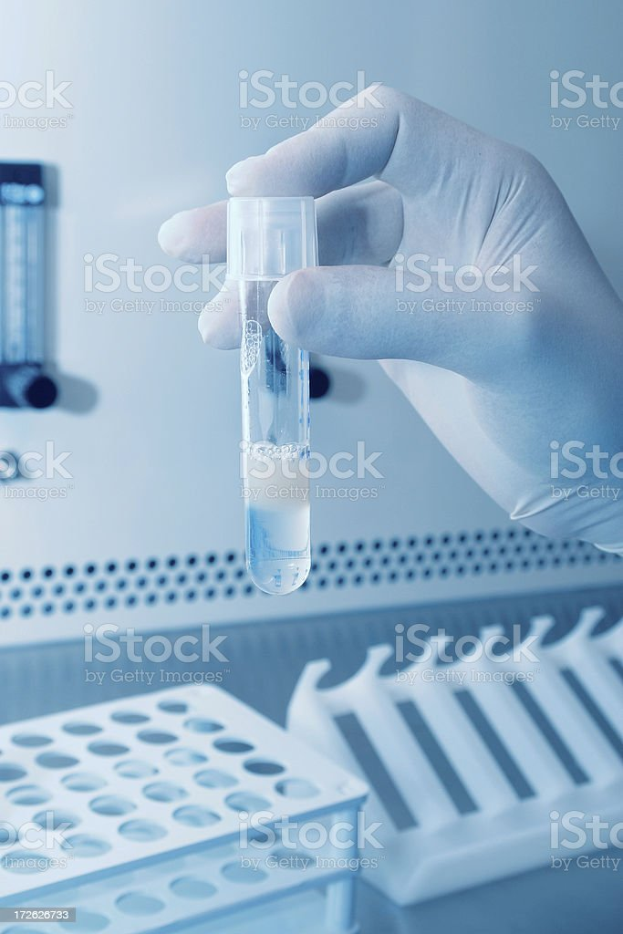 Artificial insemination royalty-free stock photo