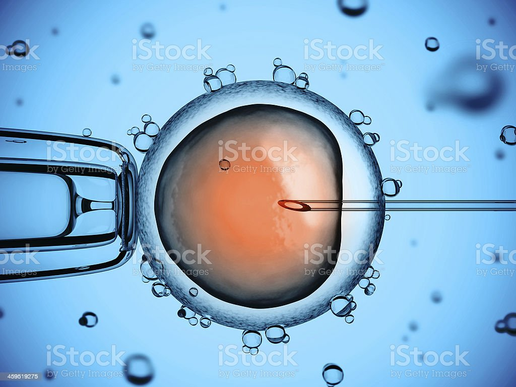 artificial insemination stock photo