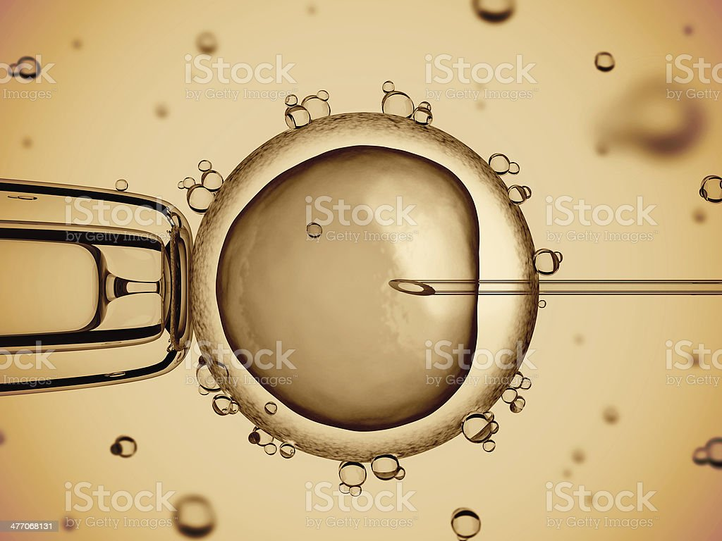 artificial insemination stock photo