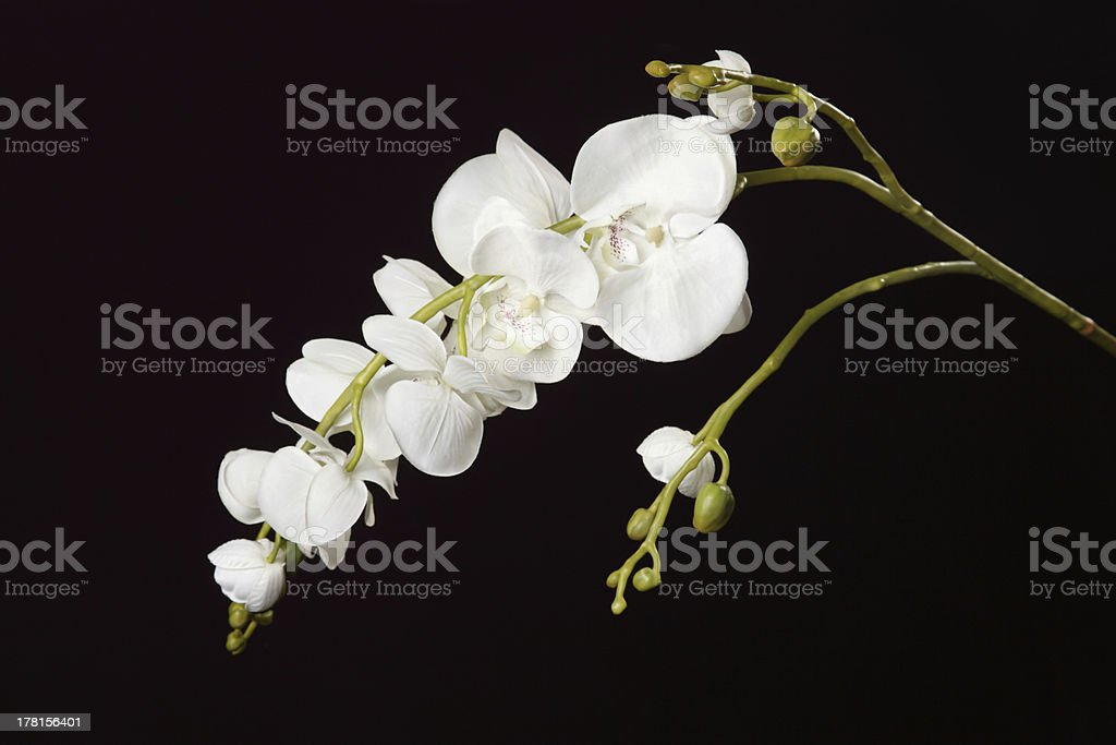 Artificial orchid on a black background royalty-free stock photo