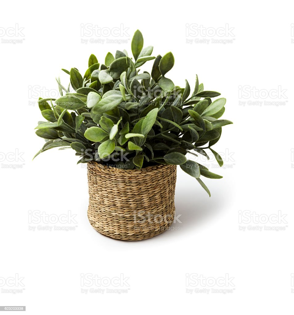 Artificial plant in pot stock photo