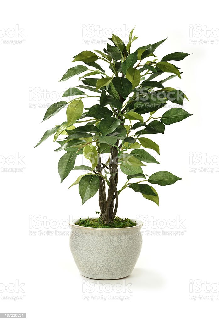 Artificial Tree stock photo