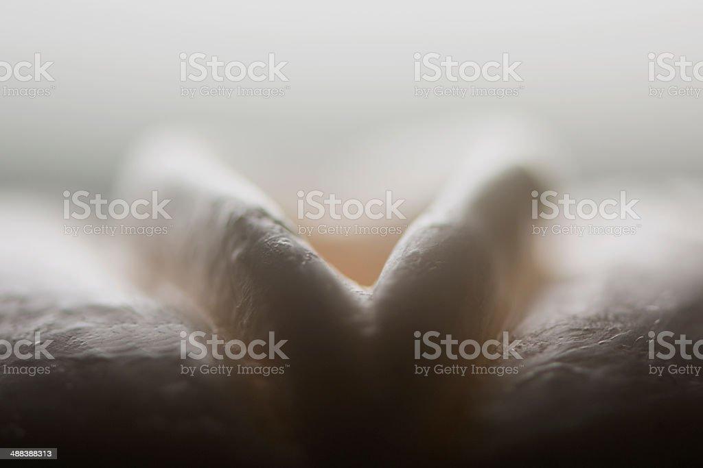 Artificial Vagina stock photo