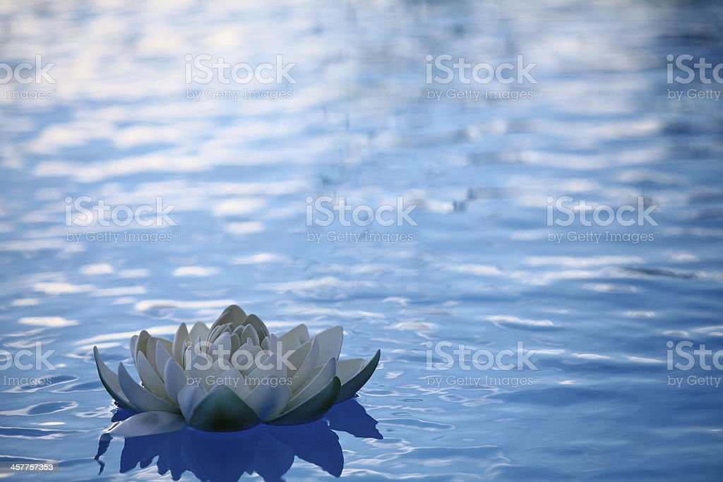 Artificial water lilly stock photo