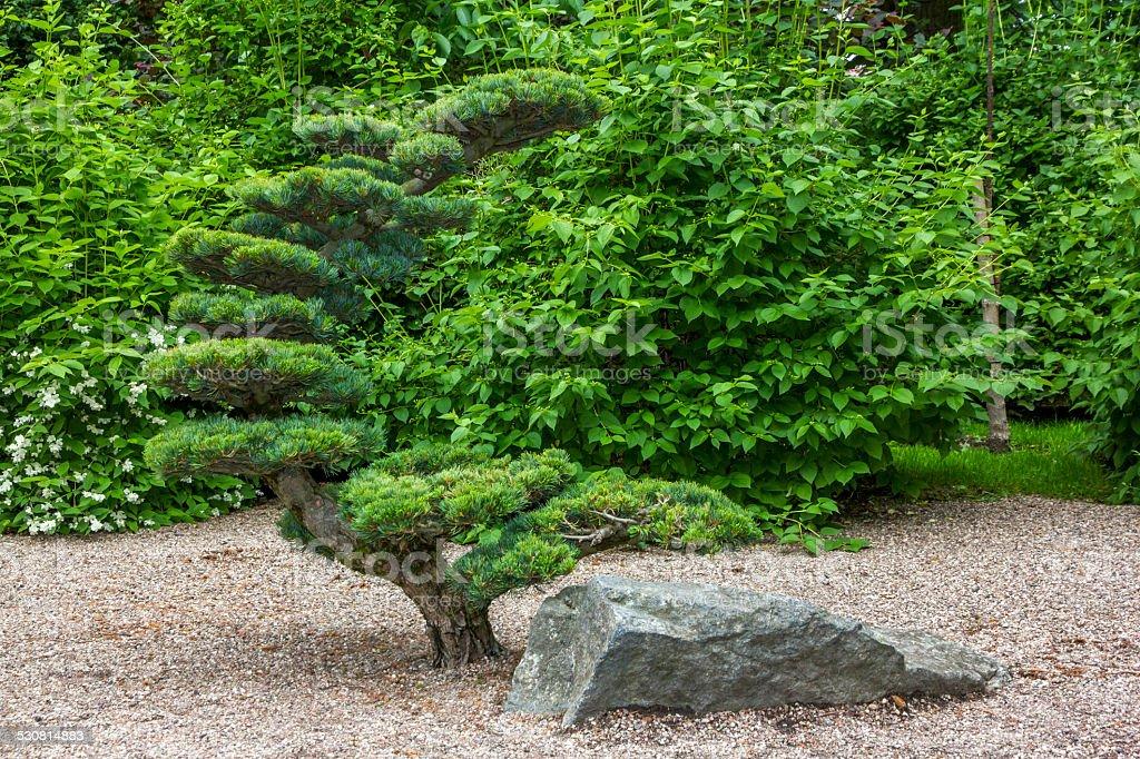 artificially shaped tree stock photo