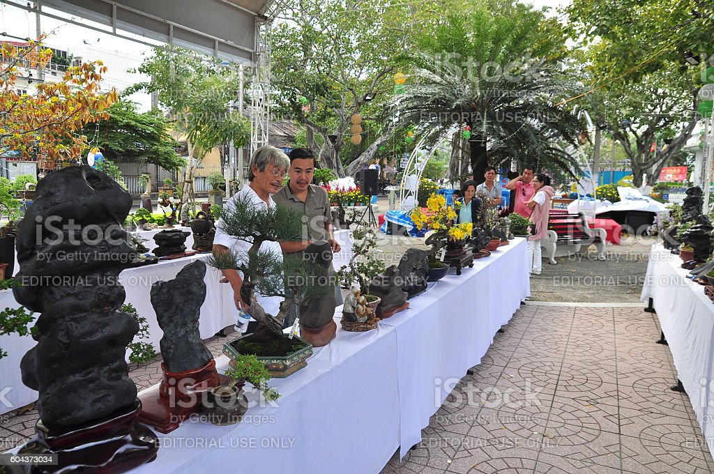 Artisans are viewing at a bonsai contest stock photo