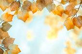 Artistic Autumn Leaf Background Series