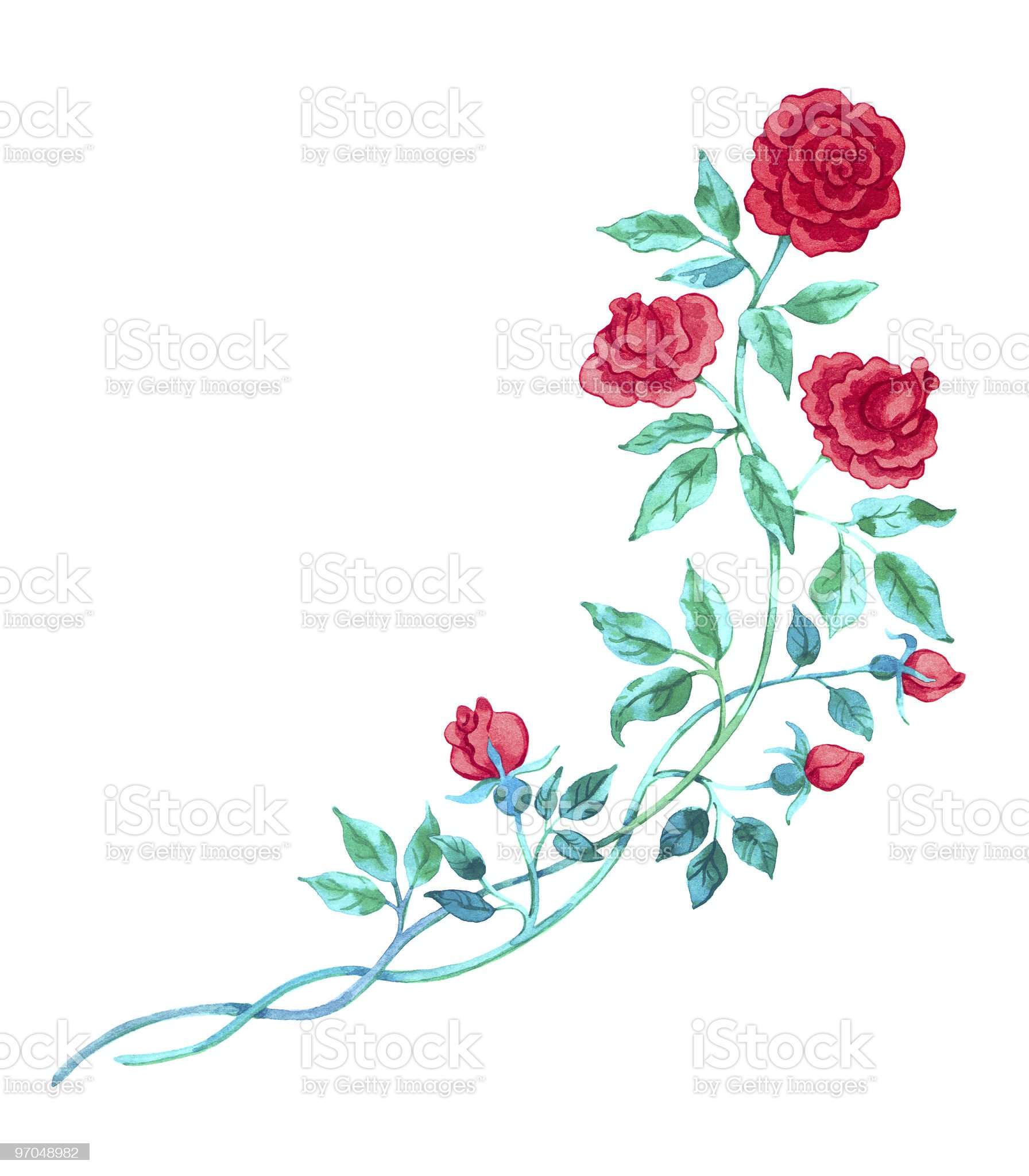 artistic drawing / red watercolor rose /  isolated on white royalty-free stock vector art