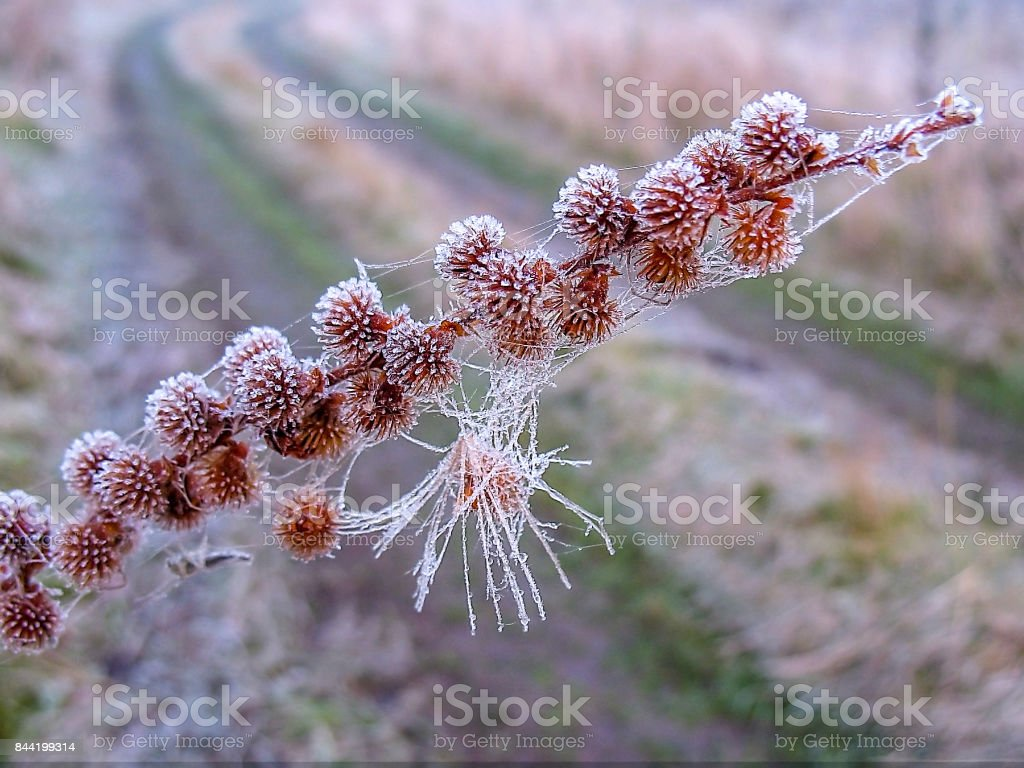 Artistic photo with a branch of grass in the frost on the background of the road stock photo