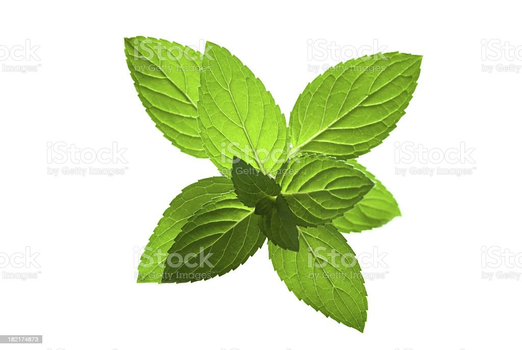 Artistic photograph of a sprig of fresh mint stock photo