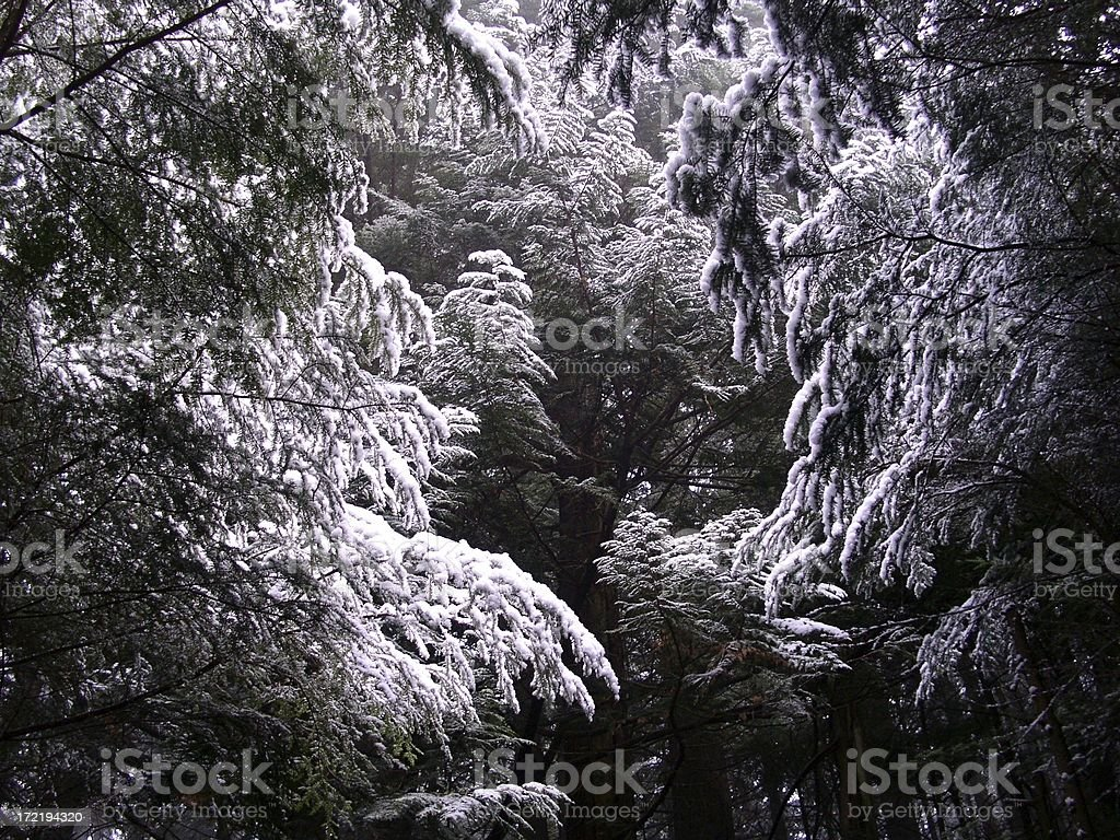 Artistic Snow Scene stock photo