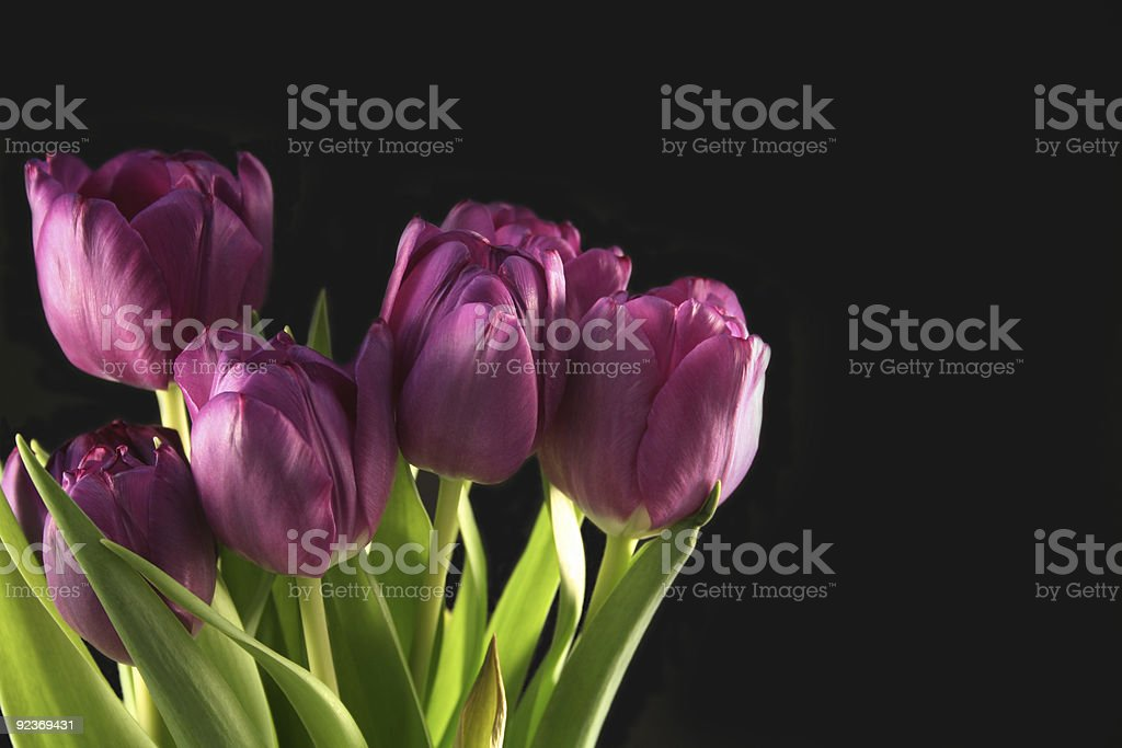 Artistic tulips royalty-free stock photo