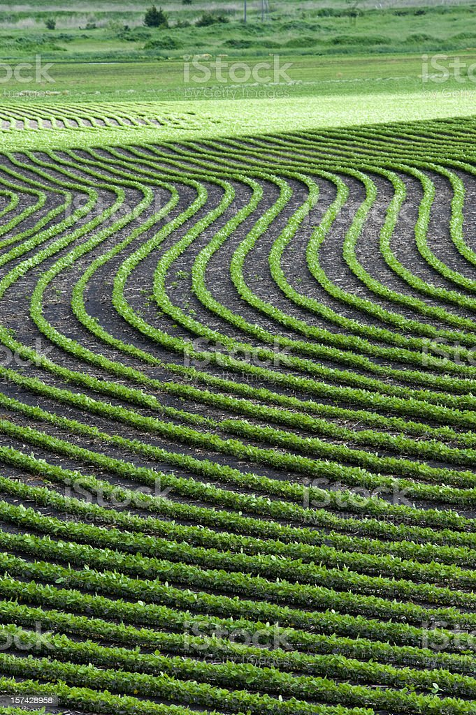 Artistic wavy crop patterns royalty-free stock photo