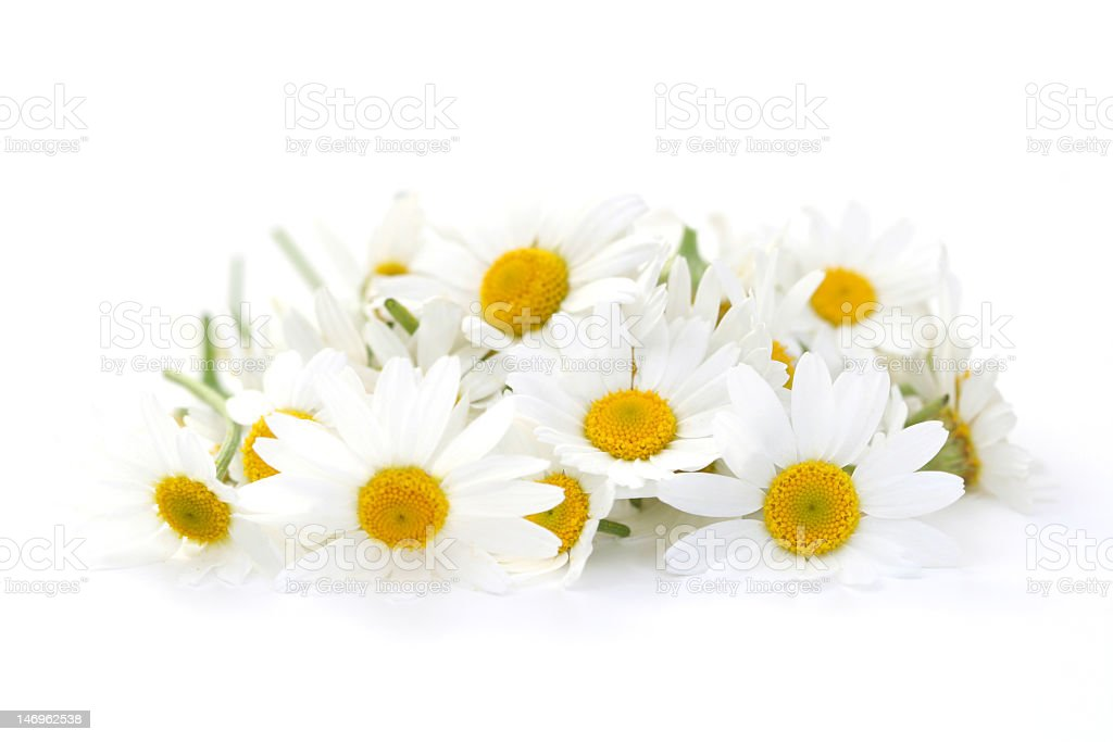 Artistically placed Camomile flowers on a white surface stock photo