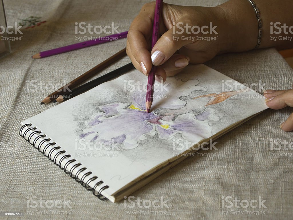 Artist's hand drawing an iris flower head royalty-free stock photo