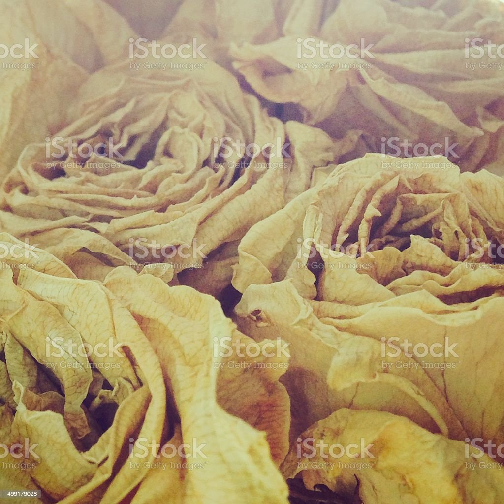 Artsy Dried Roses stock photo