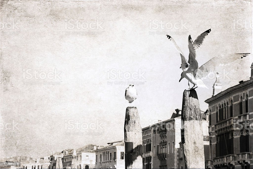 artwork  in grunge style,  seagull royalty-free stock photo