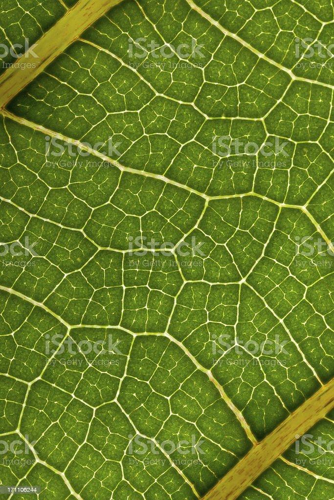 artwork of nature - leaf macro royalty-free stock photo