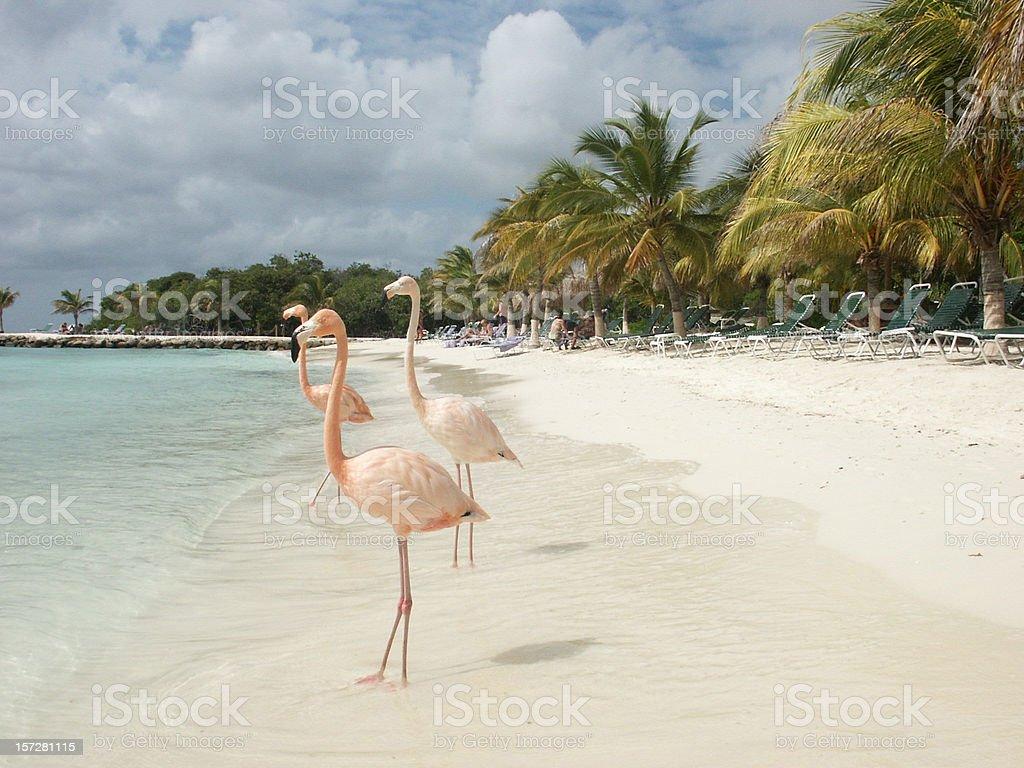 Aruba beach royalty-free stock photo