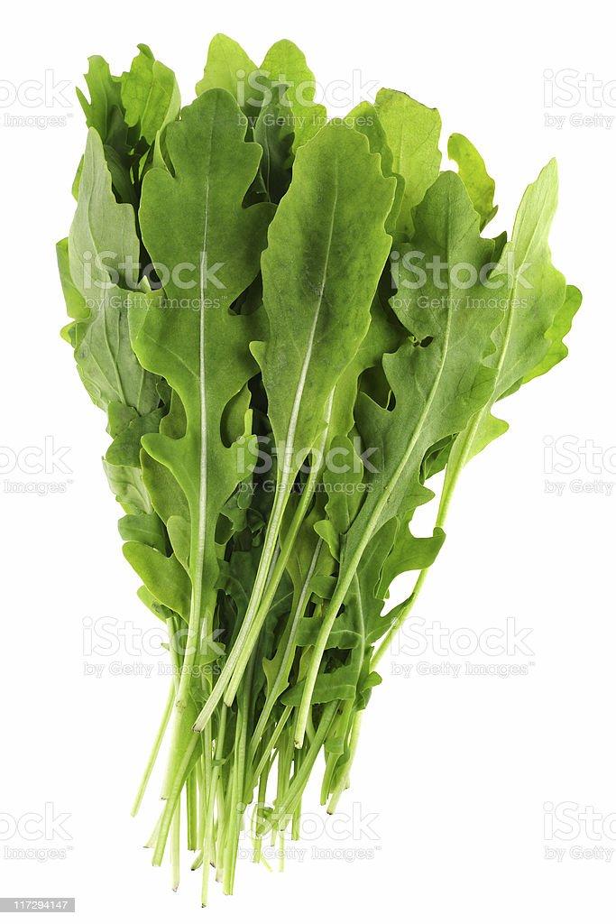 Arugula leaf stock photo