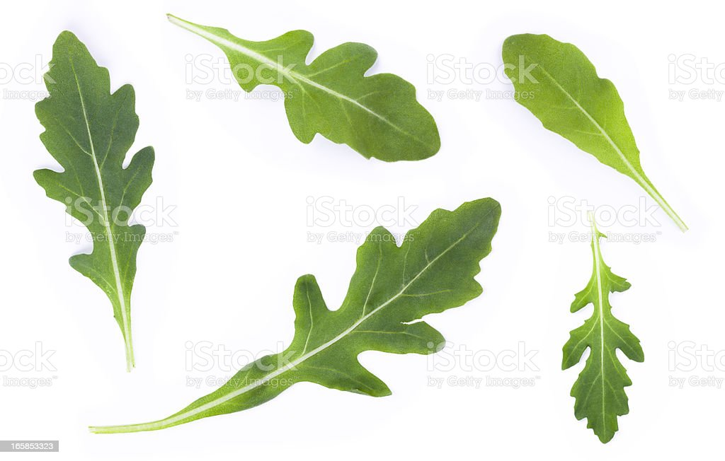 rucola set stock photo