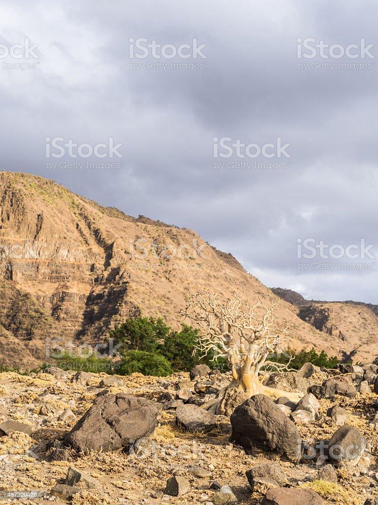 Arusha Region stock photo